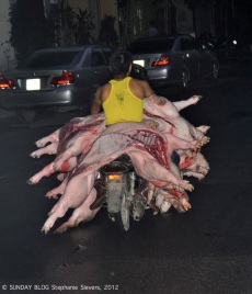 Pigs on motorbike, Vietnam