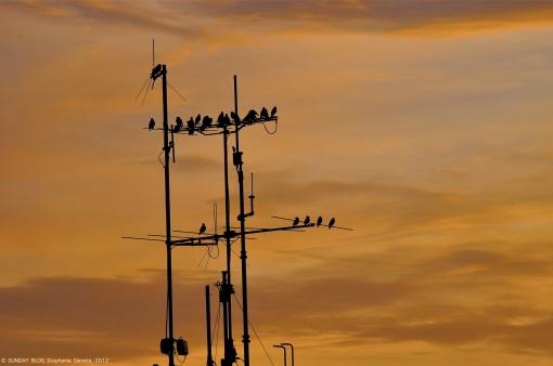 Birds at sunset, Mannheim