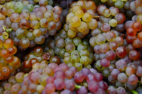 Grapes, Vienna