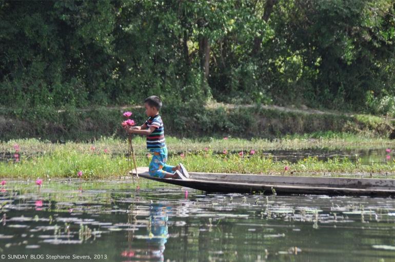Boy collecting lotus flowers, Myanmar