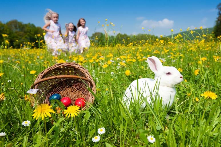 Easter rabitt bringing eggs to the kids